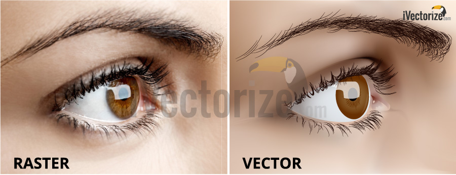 Raster eye picture and vector eye